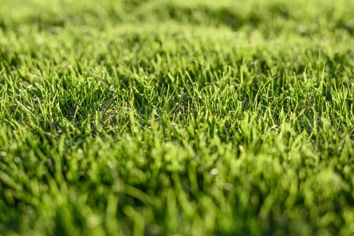 Jak założyć trawnik, rodzaje trawnika